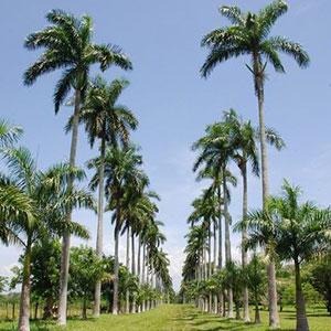 Cienfuegos City Tour + Jardin Botanico